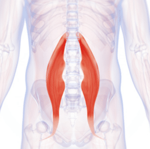 hip flexor location on body